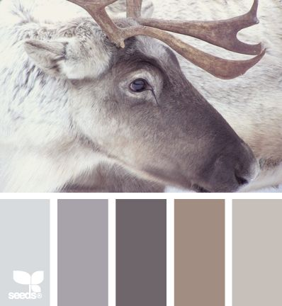 color-palette-friday-palette-khaki-and-chrome